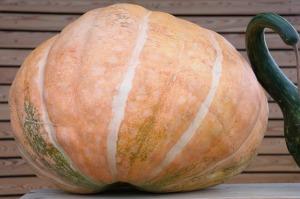 pumpkin-228510_640
