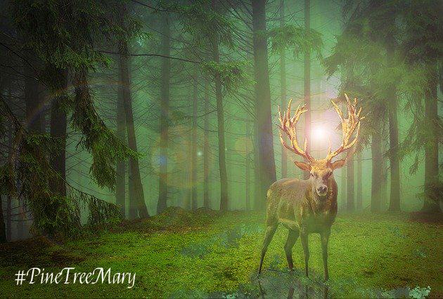 Pine Tree Mary