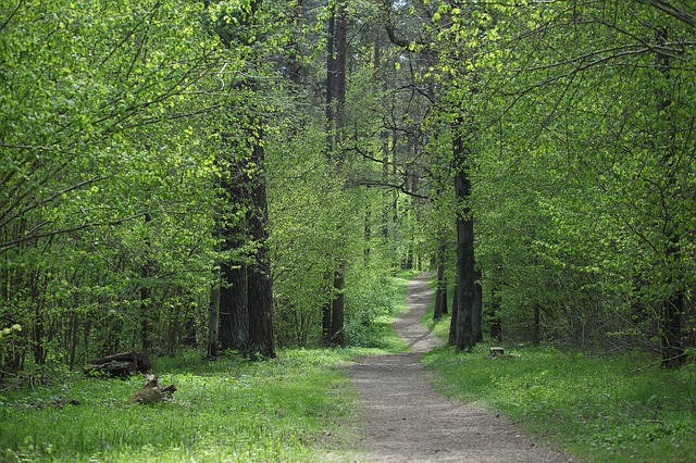 Spring Forest Up North