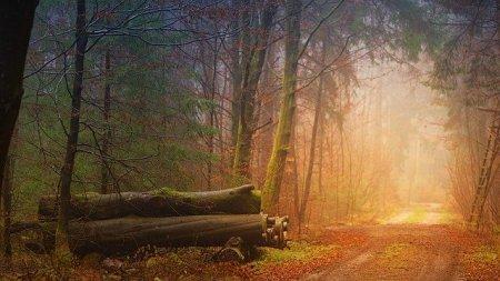 autumn-3193305_640 (1)